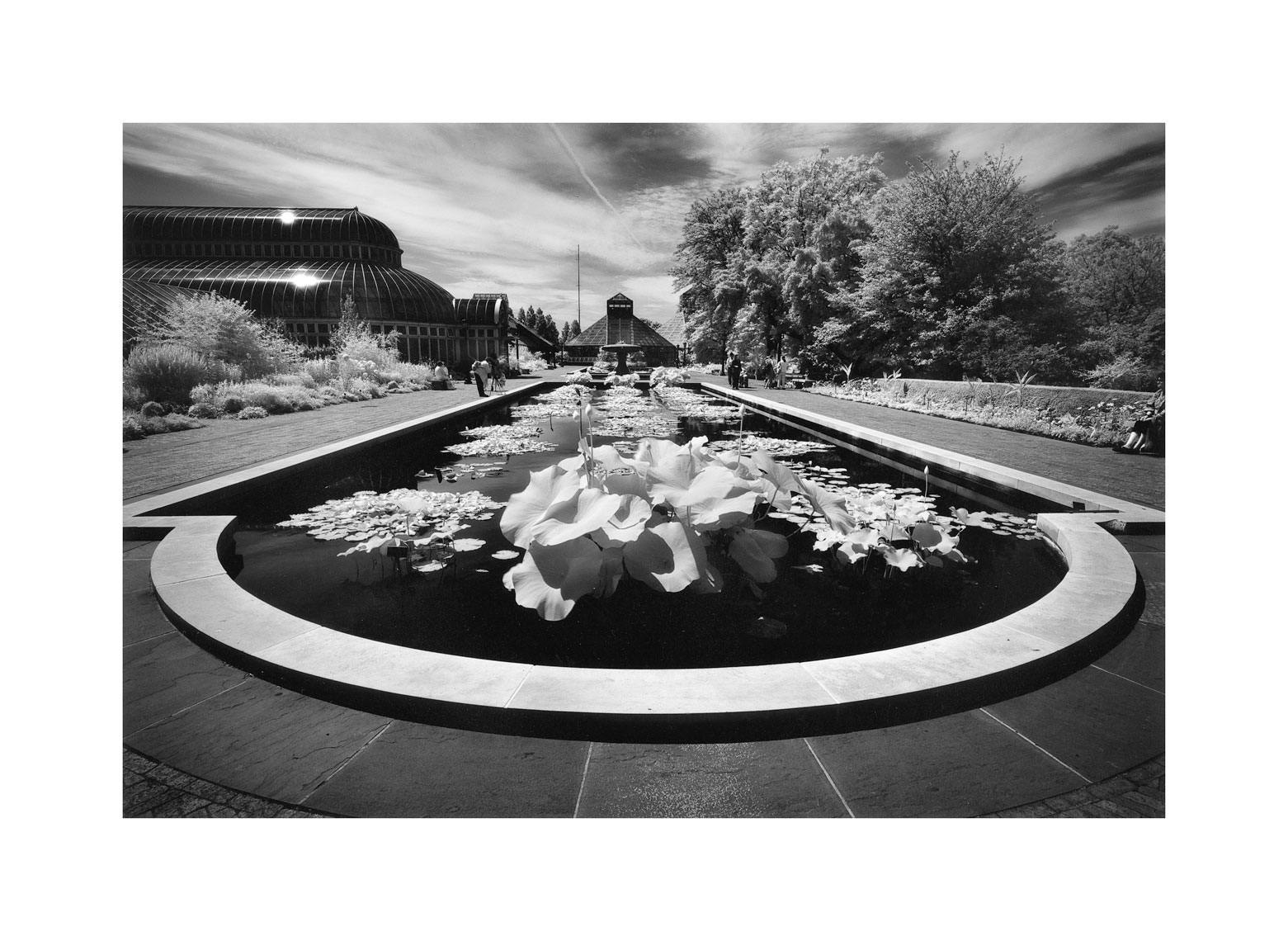 160-Lily-ponds-infrared.jpg