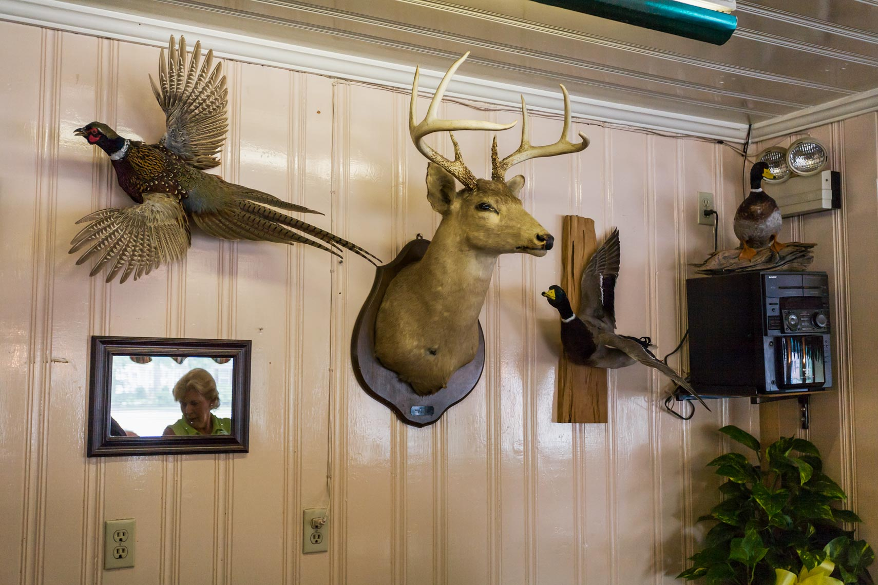 Taxidermy on the wall